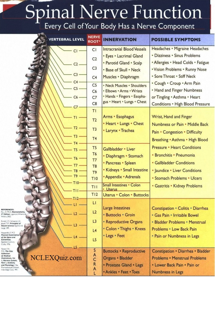 Spinal Nerve Function Cheat Sheet