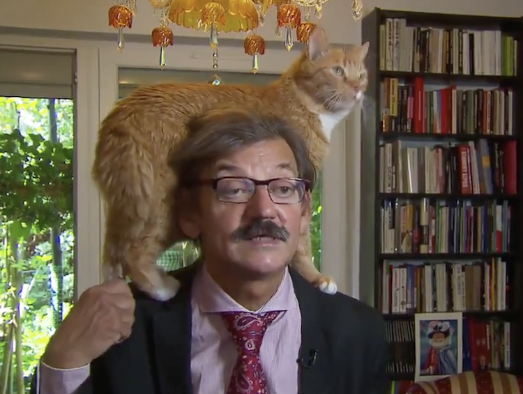 Polish Historian Calmly Conducts a TV Interview While an Orange Cat Climbs on His Shoulders