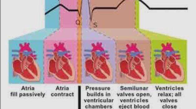 Phases of Cardiac Cycle PQRST Heart Rhythm Interpretation