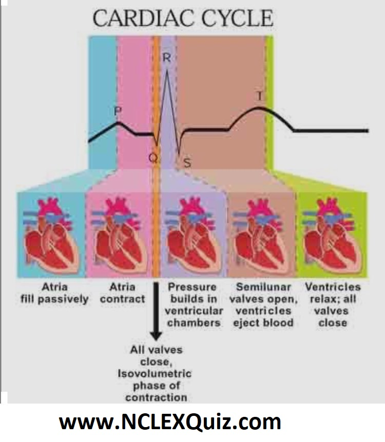 Phases of Cardiac Cycle PQRST Heart Rhythm Interpretation
