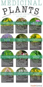 Best Medicinal Herbs to Grow at Home