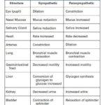 Pharmacology Nursing: Sympathetic vs Parasympathetic Effects on Body